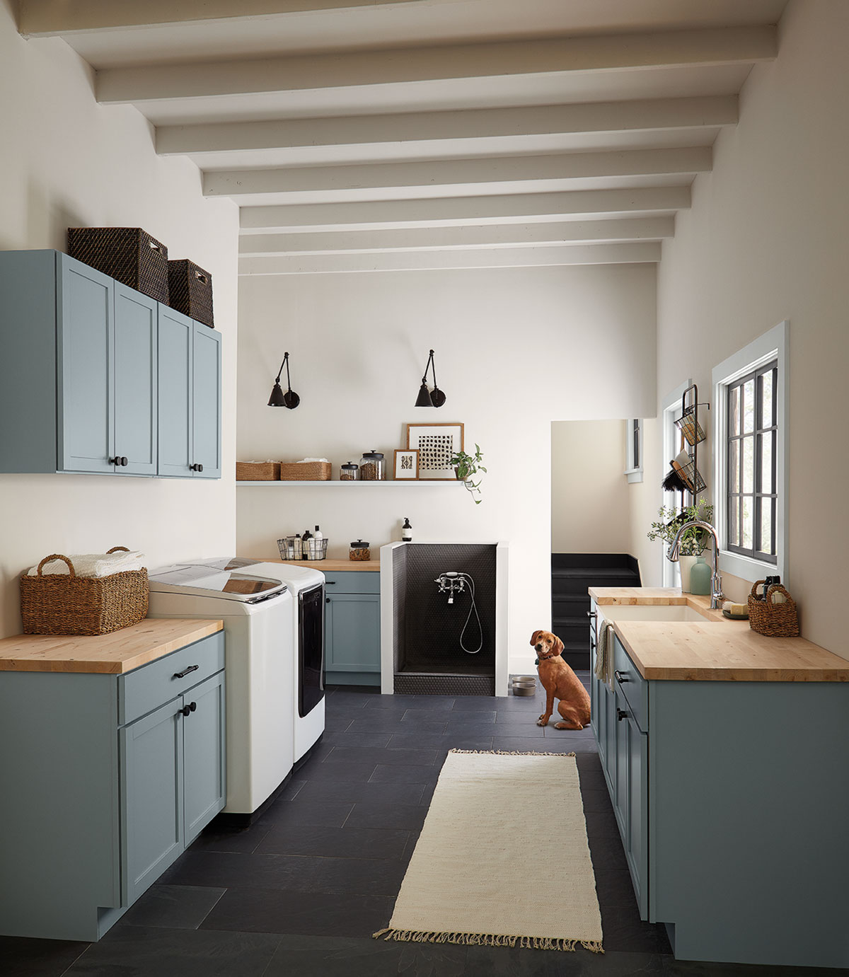 laundry room, sink and tops on the right side, laundromat and dryer on the left side, dog sitting in the middel