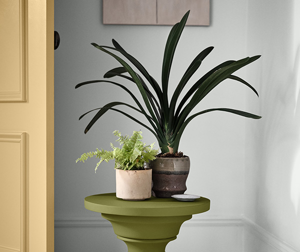 Indoor plants on a table painted in Relentless Olive SW 6245 in front of a wall painted with Rock Candy SW 6321.