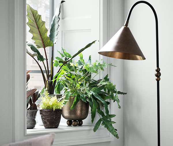 Natural light streaming through a window with indoor plants with wall painted in Rock Candy SW 6231.