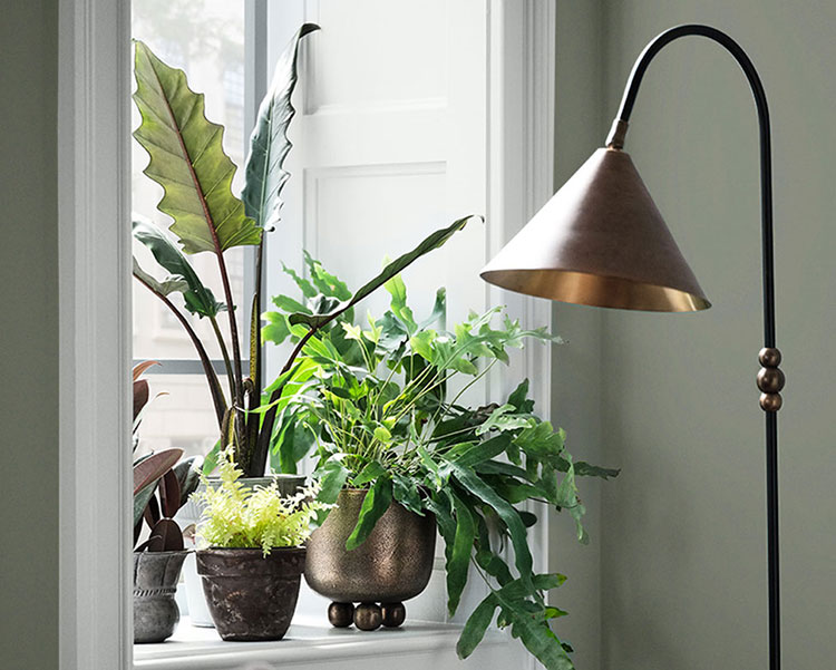 biophilic design - window vignette of a window sill lined with potted greenery