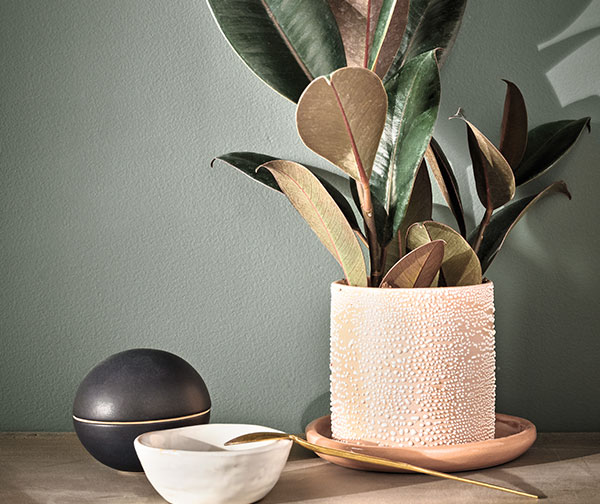 Plant in earth-toned planter with other earth-toned objects in front of a wall painted in Pewter Green SW 6208.