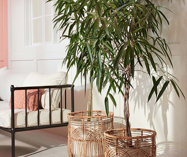 Detail image with potted trees in boho wicker planters, beside white couch.