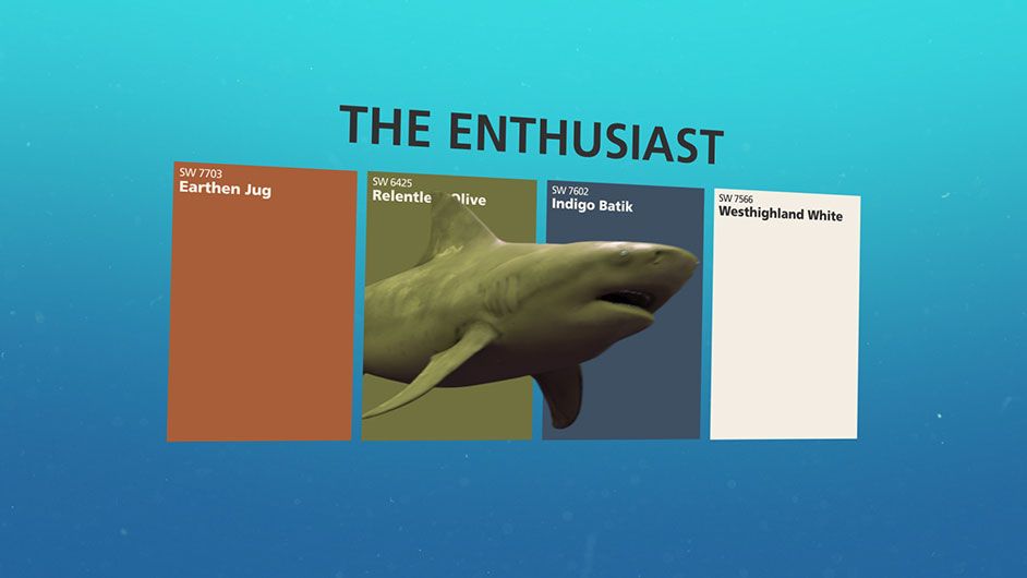 Bull shark swimming through the color chips Earthen Jug SW 7703, Relentless Olive SW 6425, Indigo Batik SW 7602 and Westhighland White SW 7566.