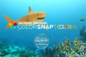 3 Colorful Personalities of Shark Week